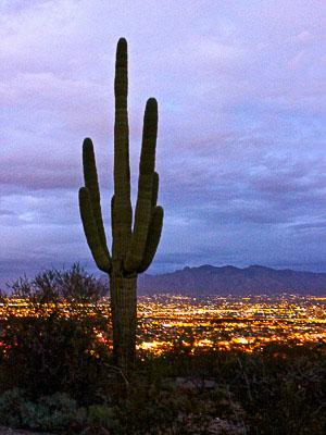 Arizona - Tumamoc Hill View