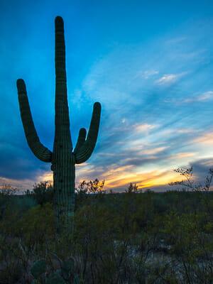 Tucson Arizona - Sahuaro