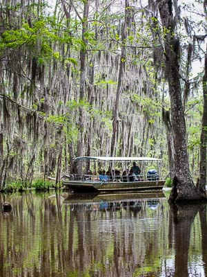 Louisiana Bayou Swamp Tour