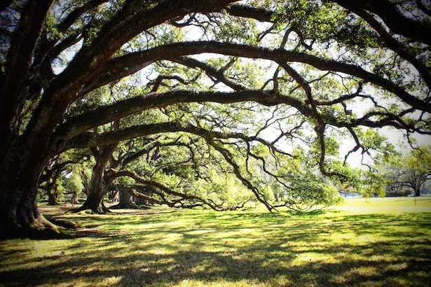 New Orleans Oak Alley Plantation