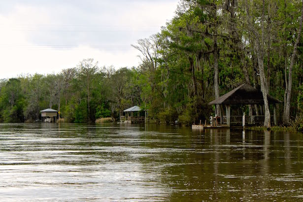 Honey Island Swamp Tour