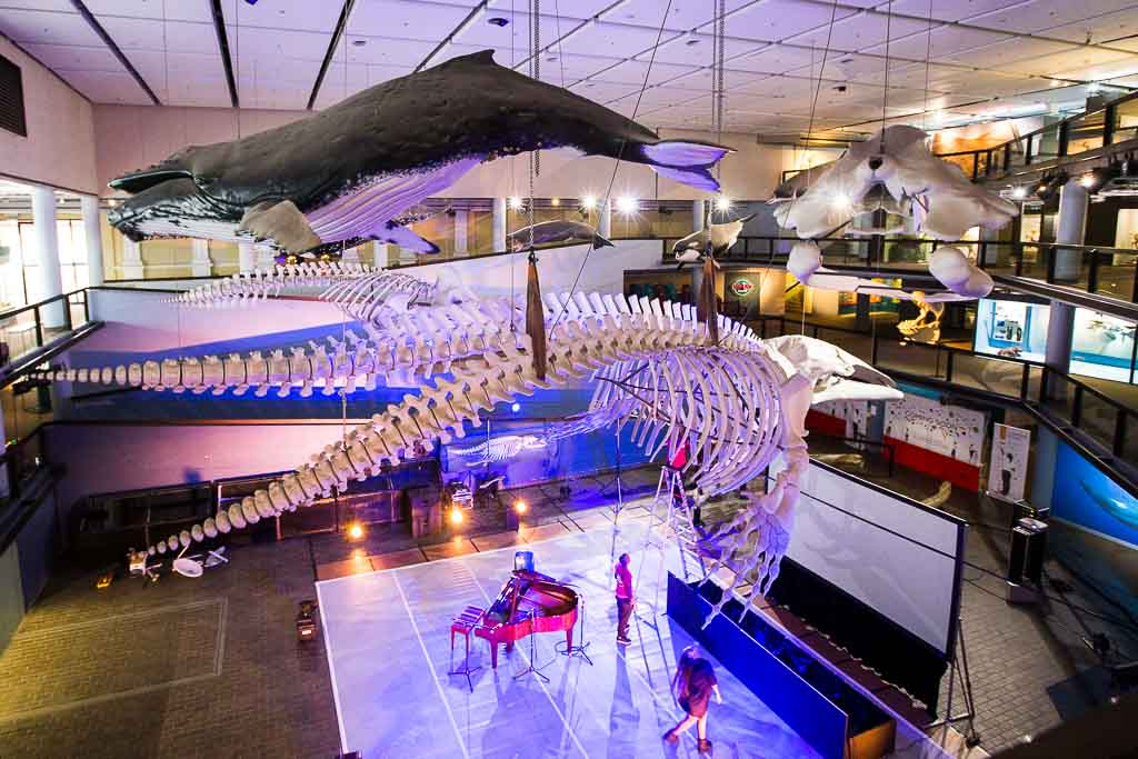 Cape Town - South African Museum - Whale Well